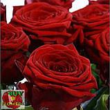 Красная роза Ред Наоми 40 - 100 см, фото 4
