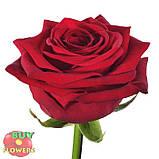 Красная роза Ред Наоми 40 - 100 см, фото 2