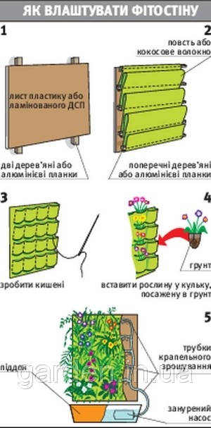 Фитостена - Комнатные растения растут на стене.
