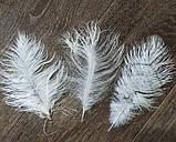 Пір'я страуса Декоративне пір'я Біле 25-30см, фото 9