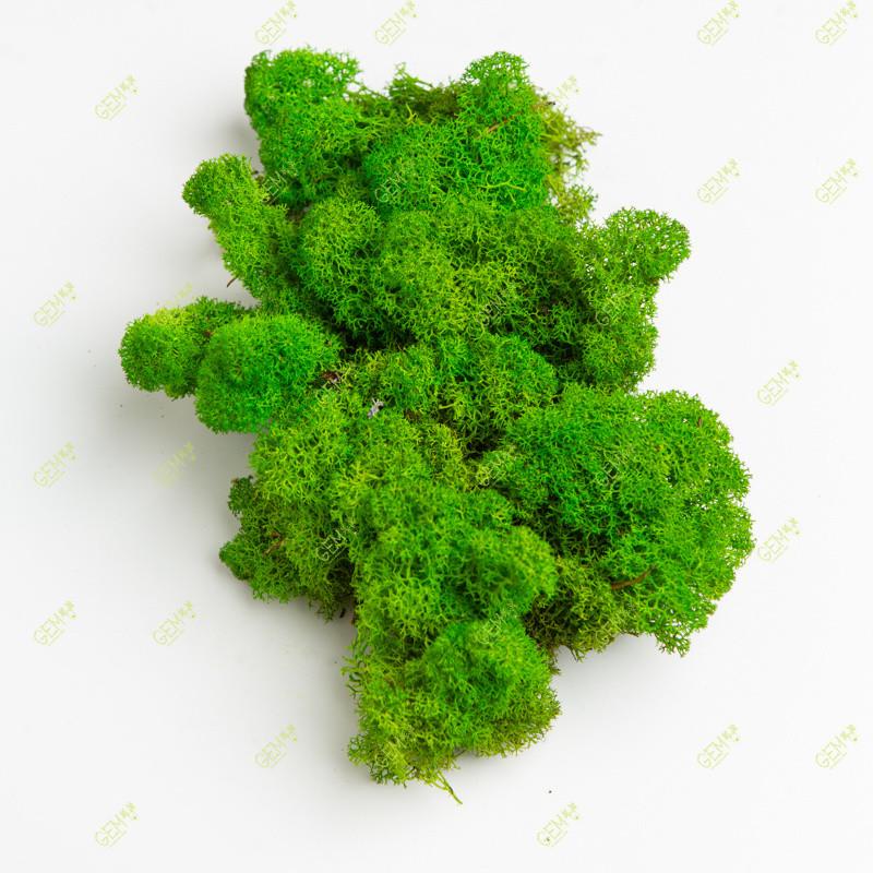 Стабілізований мох Green Ecco Moss скандинавський лишайник ягель Green Light 1 кг