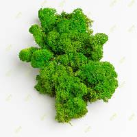 Стабілізований мох Green Ecco Moss скандинавський лишайник ягель Green Light 1 кг, фото 1