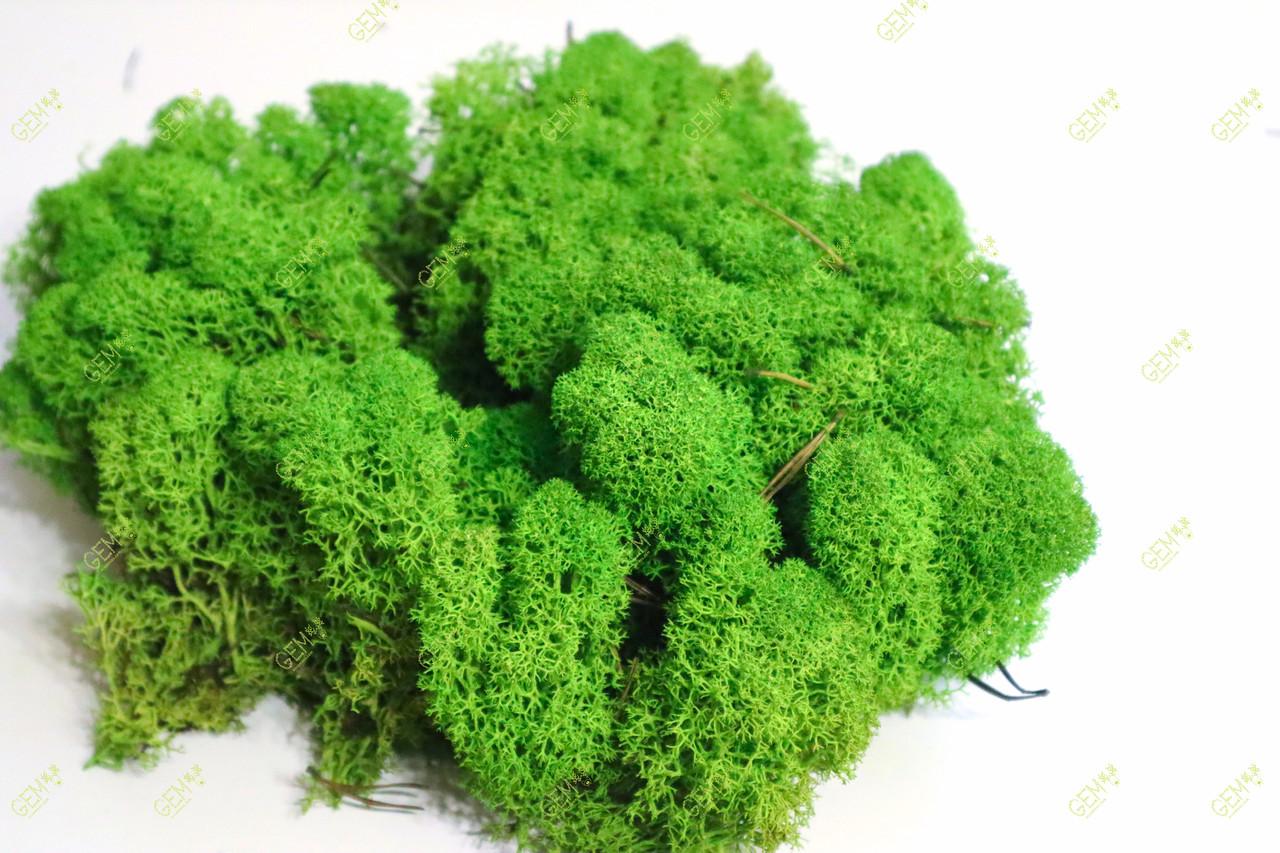 Стабілізований мох Green Ecco Moss скандинавський лишайник ягель Apple Green 4 кг