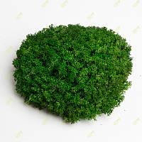 Стабілізований мох Grren Ecco Moss український ягель зелена 1 кг