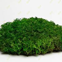 Стабілізований мох Grren Ecco Moss український ягель зелений 4 кг