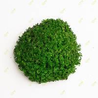 Стабилизированный мох Grren Ecco Moss украинский ягель зеленый 0.5 кг