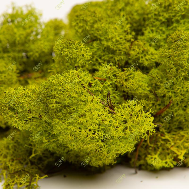 Стабілізований мох Green Ecco Moss стабілізований ягель Lime 0.5 кг