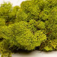 Стабілізований мох Green Ecco Moss стабілізований ягель Lime 0.5 кг, фото 1