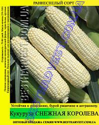 Насіння кукурудзи «Снігова Королева» 1 кг