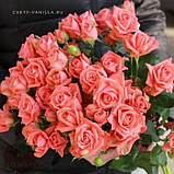 Персиковая роза спрей Барбадос, фото 5