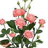 Персиковая роза спрей Барбадос, фото 6