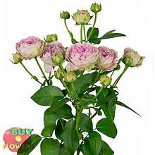Розовая роза спрей Блоссом Баблз