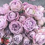 Розовая роза спрей Блоссом Баблз, фото 3