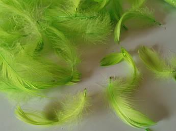Пасхальный декор, перо салатовое