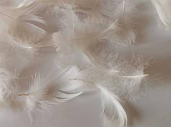 Пасхальный декор, перо белое