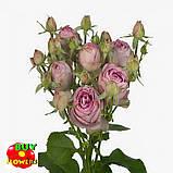 Роза розовая Лавендер Лейс екстра, фото 6