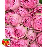 Роза розовая Лавендер Лейс екстра, фото 7
