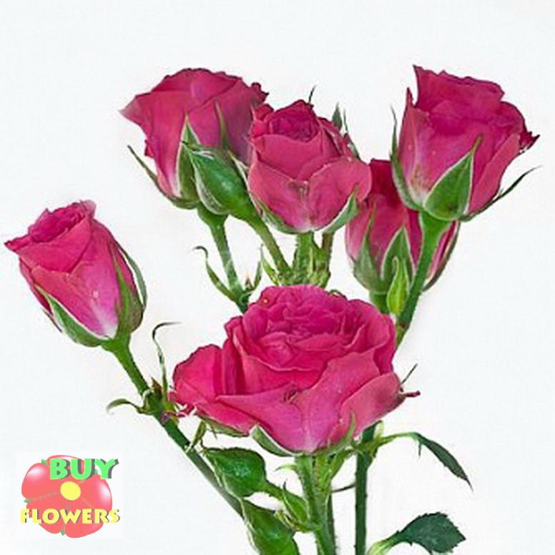 Лавли Лидия роза веточная