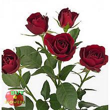 Мирабель роза спрей