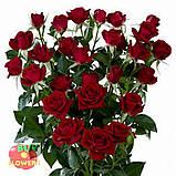 Мирабель роза спрей, фото 4