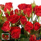 Мирабель роза спрей, фото 7