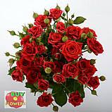 Мирабель роза спрей, фото 6