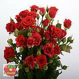 Мирабель роза спрей, фото 5