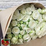 Мисс Бомбастик роза белая спрей, фото 7