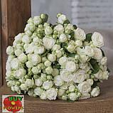 Мисс Бомбастик роза белая спрей, фото 6