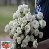 Мисс Бомбастик роза белая спрей, фото 3