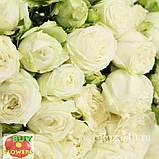 Мисс Бомбастик роза белая спрей, фото 5