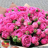 Мисти Баблз роза пионовидная, фото 7
