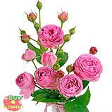 Мисти Баблз роза пионовидная, фото 8
