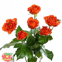 Оранж Фаер роза спрей