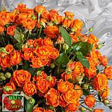 Оранж Фаер роза спрей, фото 5