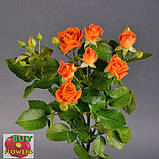 Оранж Фаер роза спрей, фото 4