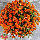 Оранж Фаер роза спрей, фото 6