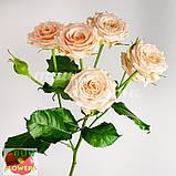 Таня роза кремовая ветка, фото 5