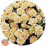 Таня роза кремовая ветка, фото 7