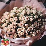 Таня роза кремовая ветка, фото 6