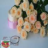Таня роза кремовая ветка, фото 4