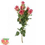 Фаерворкс роза двухцветная, фото 2
