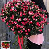 Фаерворкс роза двухцветная, фото 4