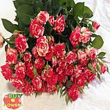Фаерворкс роза двухцветная, фото 3