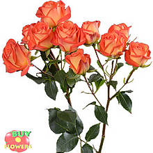 Фиеста Баблз розы