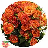 Фиеста Баблз розы, фото 5