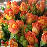 Фиеста Баблз розы, фото 6