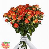 Фиеста Баблз розы, фото 3