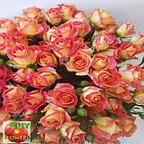 Фиеста Баблз розы, фото 8