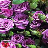 Фикшен сиреневая роза, фото 4